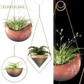 PLANTS 143