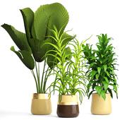 Коллекция растений 111.
