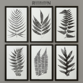 RH 1859 English Fern Prints Collection