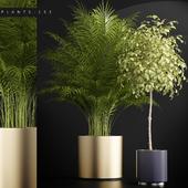 PLANTS 152