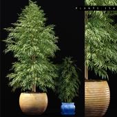 BAMBOO PLANTS 154
