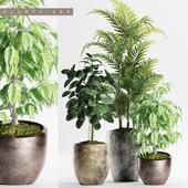PLANTS 159