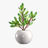 Pot Plant 14