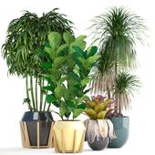 Коллекция растений 152.