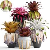 Коллекция растений 153. Bromelia