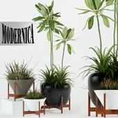 Plants collection 77 Modernica pots