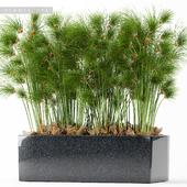 PLANTS 170