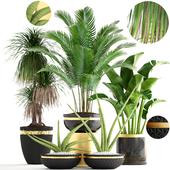 Коллекция растений 169.
