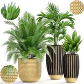 Коллекция растений 188.