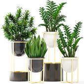 Коллекция растений 194