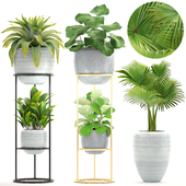 Collection of plants.