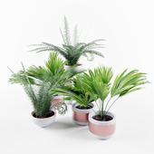 Plants: 3x palm & 2x fern