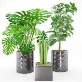 Plant 44