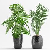 Plant 45