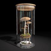 Mushroom florarium