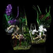 Terrarium vases with Orchids