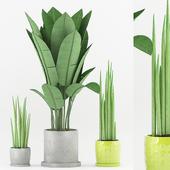 Plant 49