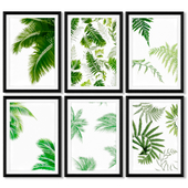 A series of posters with leaves of a fern and palm trees.