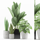 Plant 58