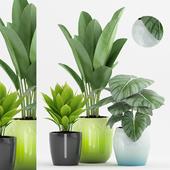 Plant 61