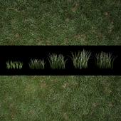 Трава для экстерьеров