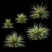 Растения для экстерьера v2