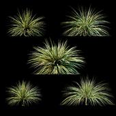Растения для экстерьера v3