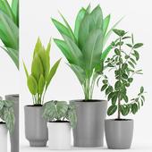 Plant 68