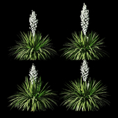 A blossoming yucca. 4 models