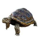 Bronze turtle figurine