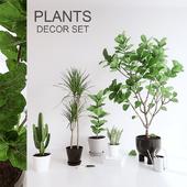 PLANTS SET (vray GGX, corona PBR)