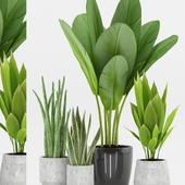 Plant 73