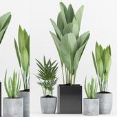 Plant 76