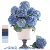 Collection of flowers 56. Hydrangea.
