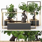 Plants tree 34