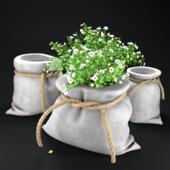 Pots of bags