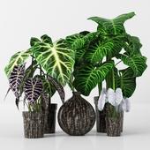 Plants tree 36