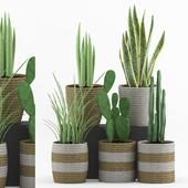 Plant 79