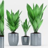 Plant 80