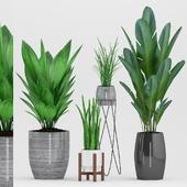 Plant 81