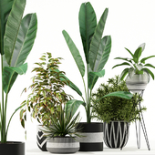 Plants collection 114