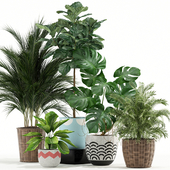 Plants collection 115