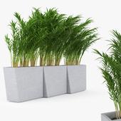 Twista Contemporary Modern Outdoor Planter Pot Areca Palm