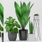 Plant 82