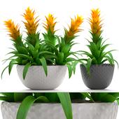 Collection of plants 229. Bromelia.