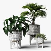 plants set 07