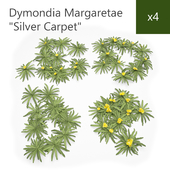 Silver Carpet - Dymondia Margaretae