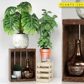 PLANTS 204