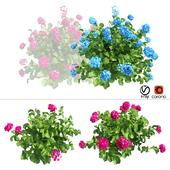Plants Hydrangea set 03