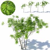 Small tree 01